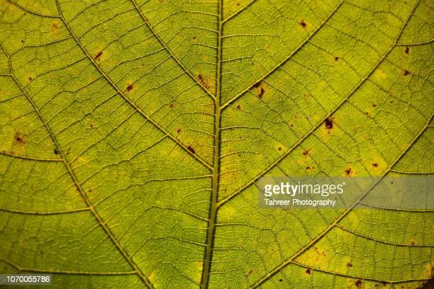 leaf background - estampa de folha - fotografias e filmes do acervo