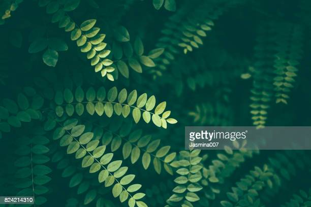 leaf background - botany stock pictures, royalty-free photos & images