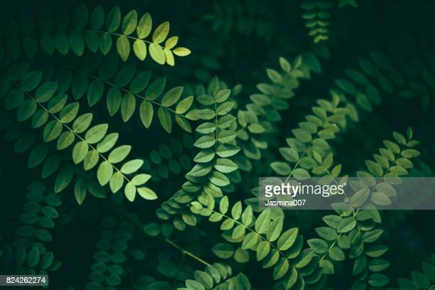 leaf background - lush foliage stock pictures, royalty-free photos & images
