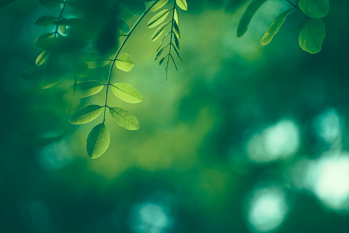 Leaf Background 844226534