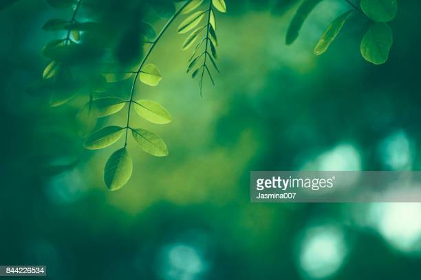 leaf background - lush stock pictures, royalty-free photos & images