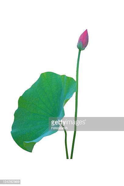 Leaf, Beauty In Nature, Stem, Pink, Blossom