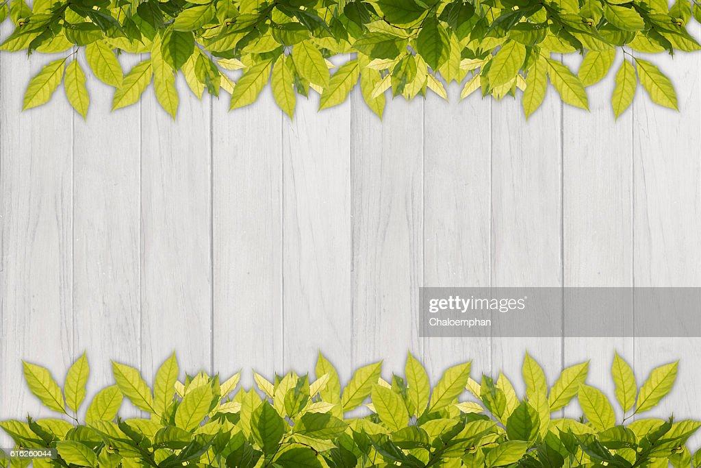 leaf border against white wood panel background : Stock Photo