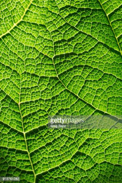 leaf close-up - greg bajor stock pictures, royalty-free photos & images