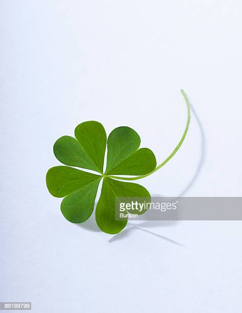 4 leaf clover - luck stock pictures, royalty-free photos & images