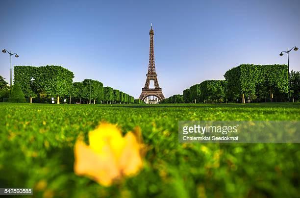Leaf fallen at The Eiffel Tower