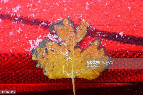A leaf frozen on a car after a rain/snow shower November 07 2017