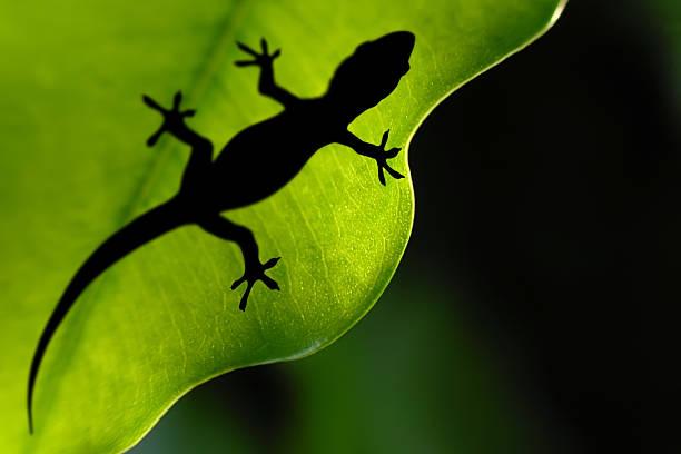 Leaf Gecko Wall Art