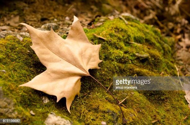 Leaf in nature / Hoja en la naturaleza