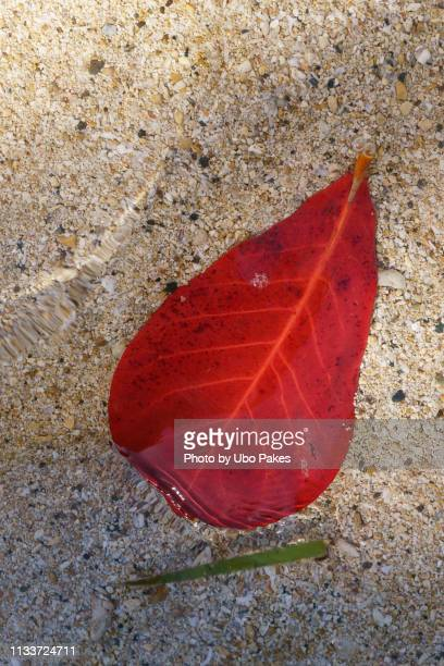 Leaf in the water