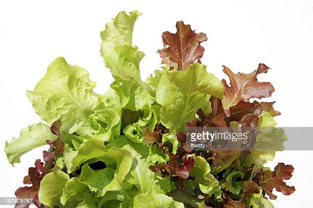 leaf lettuce isolated on white - leaf lettuce stock pictures, royalty-free photos & images