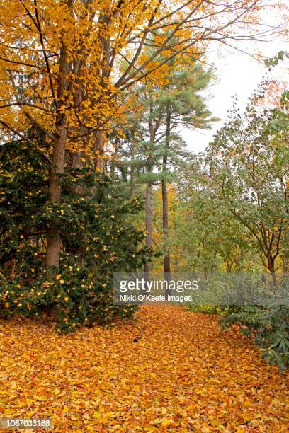 leaf lined path - wellesley massachusetts stock pictures, royalty-free photos & images