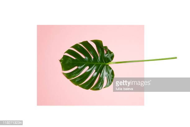 leaf of exotic plant - palm leaf stock pictures, royalty-free photos & images