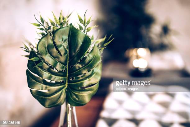 blad van bloem - softfocus stockfoto's en -beelden