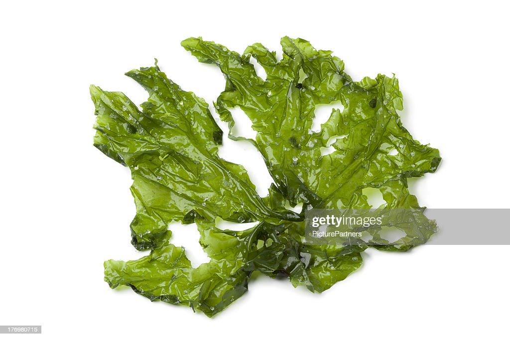 Leaf of Sea lettuce : Stock Photo