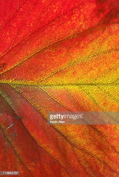 leaf of strawberry plant - autumn leaf color stock pictures, royalty-free photos & images