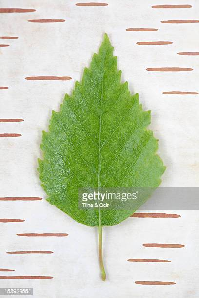 Leaf on bark background