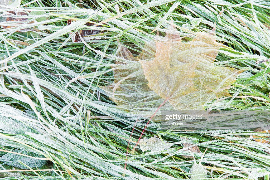 Leaf on the move when the wind blows it away. : Foto de stock