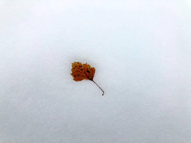 A leaf on the snow at Diesse, Switzerland
