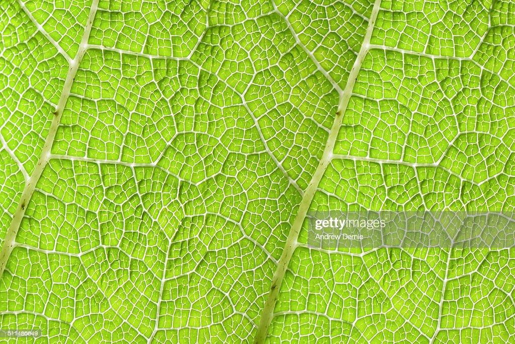 Leaf pattern : Foto de stock