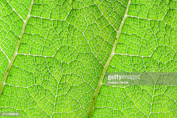 leaf pattern - andrew dernie stock pictures, royalty-free photos & images