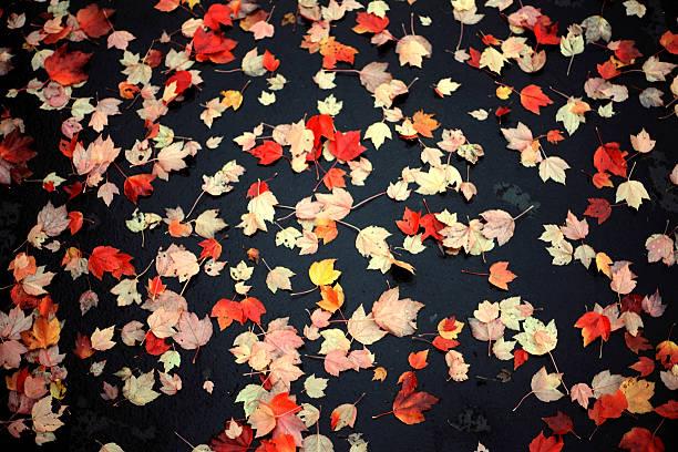 Leaf Paving