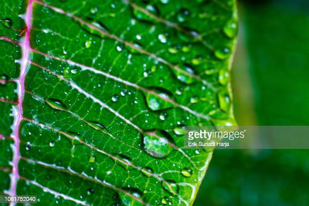 leaf - photosynthesis stock photos and pictures
