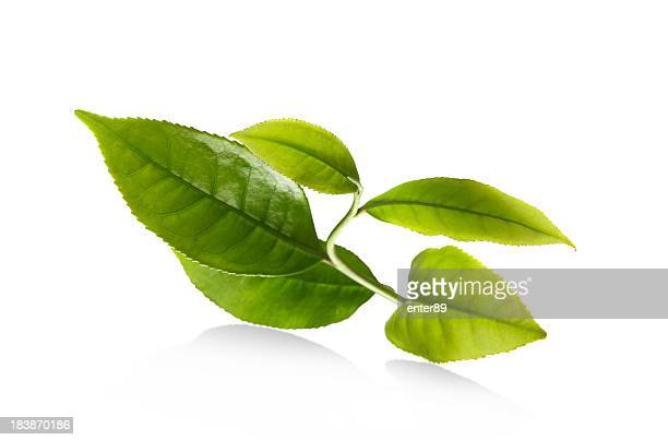leaf - tea leaves stock photos and pictures