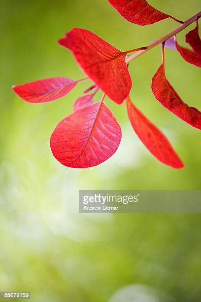 leaf - andrew dernie foto e immagini stock