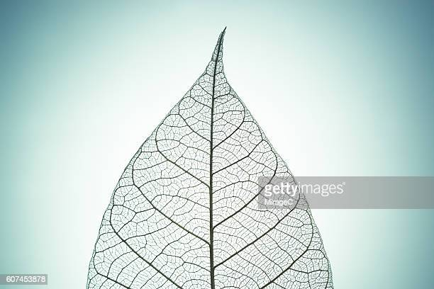 Leaf Skeleton on Green Tone Background