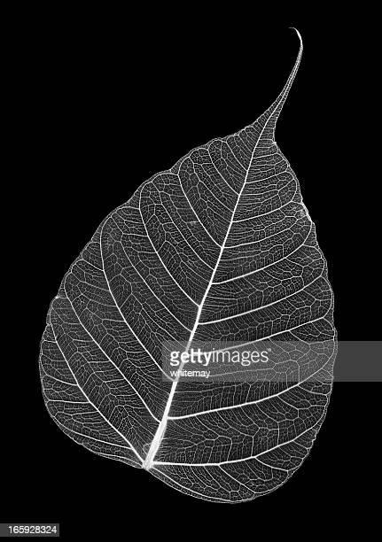 leaf skeleton - animal skeleton stock photos and pictures