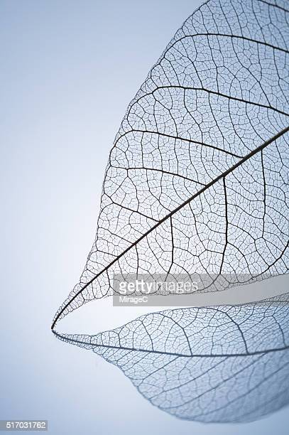 Leaf Skeleton with Reflection Pen Shape