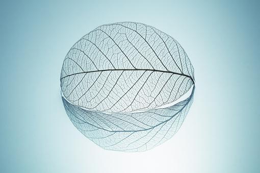 Leaf Skeleton with Reflection Round Shape - gettyimageskorea