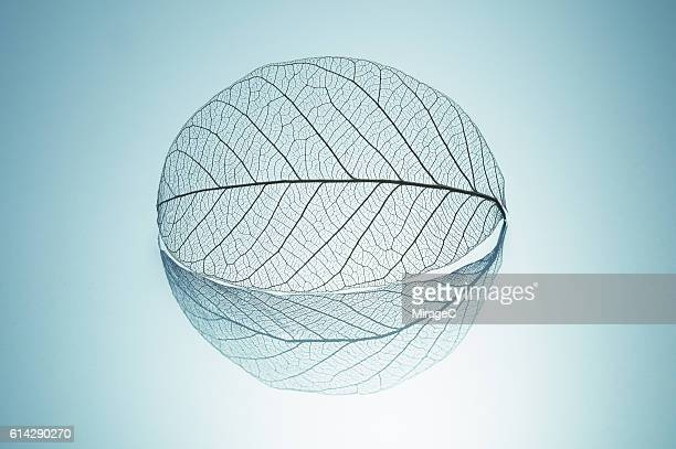 leaf skeleton with reflection round shape - 軽い ストックフォトと画像
