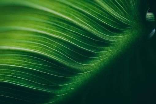 Leaf surface macro , shallow DOF 475172888