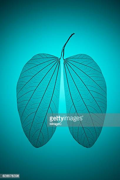 Leaf Vein in Lung Shape