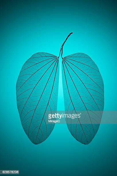 leaf vein in lung shape - cancro ai polmoni foto e immagini stock