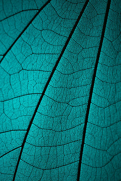 Leaf Vein Skeleton Macro Cyan Tone