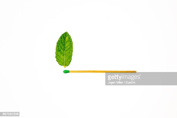 Leaf With Matchstick White Background