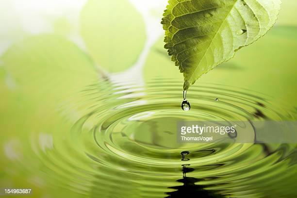 Blatt mit Wasser Tropfen