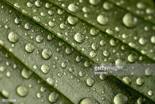Leaf with waterdrops, close-up