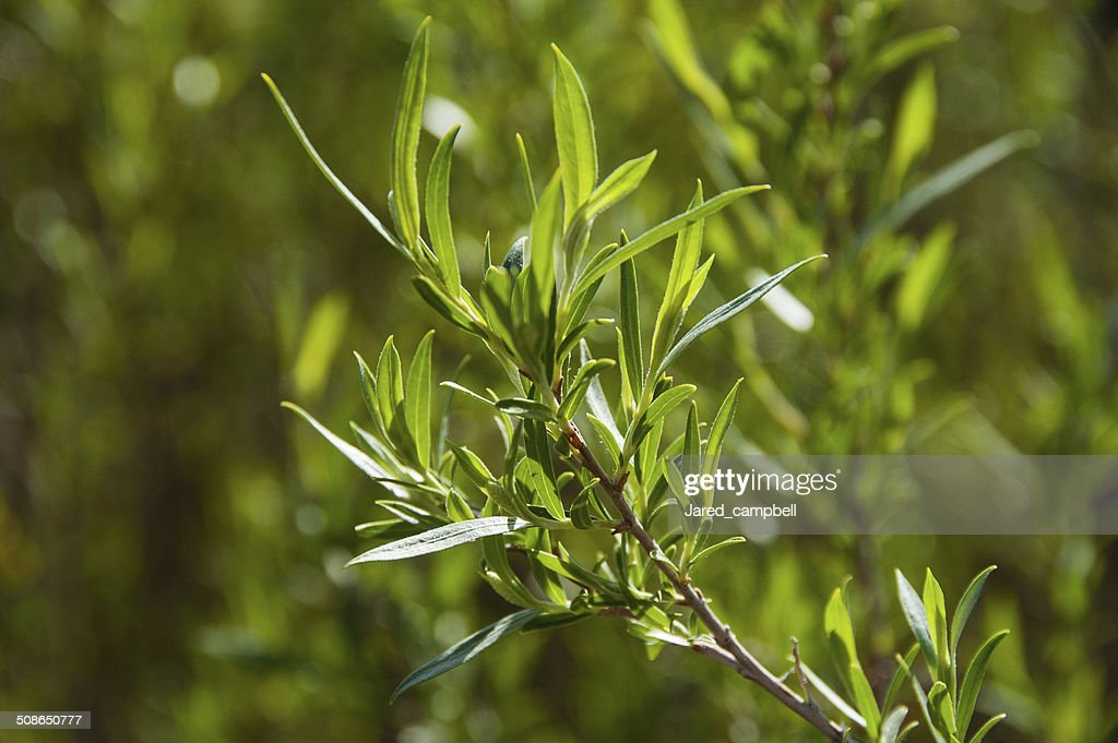 Leafes in spring : Stock Photo