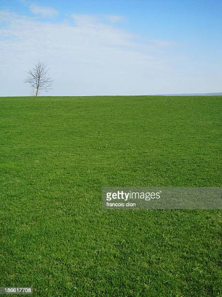 leafless tree on top of hill - hill stock pictures, royalty-free photos & images