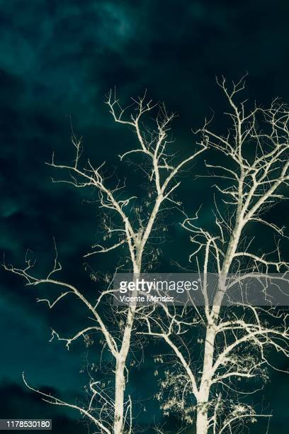 leafless trees - black and white instant print stock pictures, royalty-free photos & images