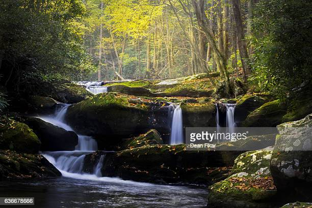 leaf-strewn stream in the smokies - parque nacional das great smoky mountains - fotografias e filmes do acervo