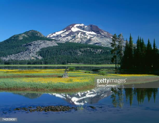 Leafy arnica (Arnica) blooms on an island in Sparks Lake in Deschutes National Forest, Oregon, USA