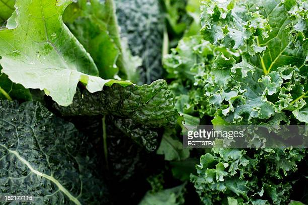 leafy greens close up