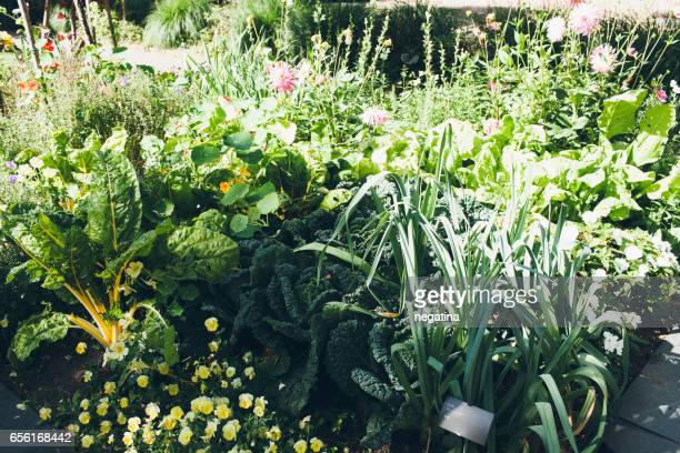leafy greens on the garden bed in Amsterdam, Netherlands