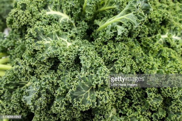 leafy kale - kale stock pictures, royalty-free photos & images