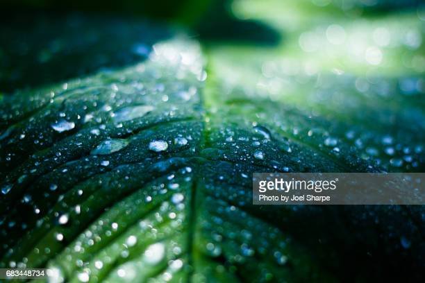 Leafy Water Droplets